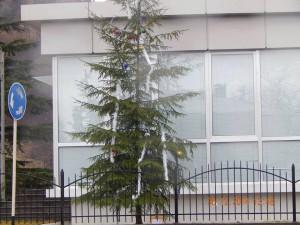 საახალწლო ნაძვის ხე