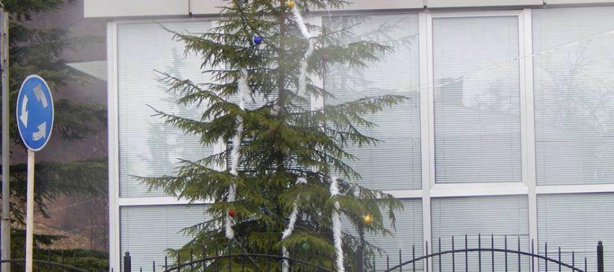 საახალწლო ნაძვის ხე?