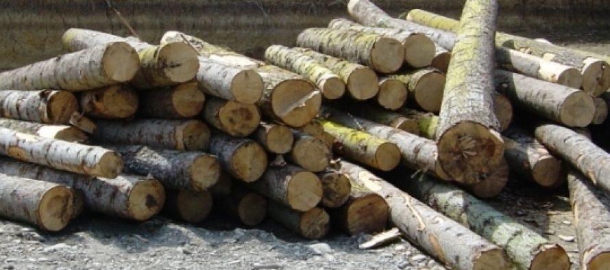 მარტვილის რაიონში უკანონოდ მოჭრილი ნაძვის ჯიშის ხე-ტყე აღმოაჩინეს