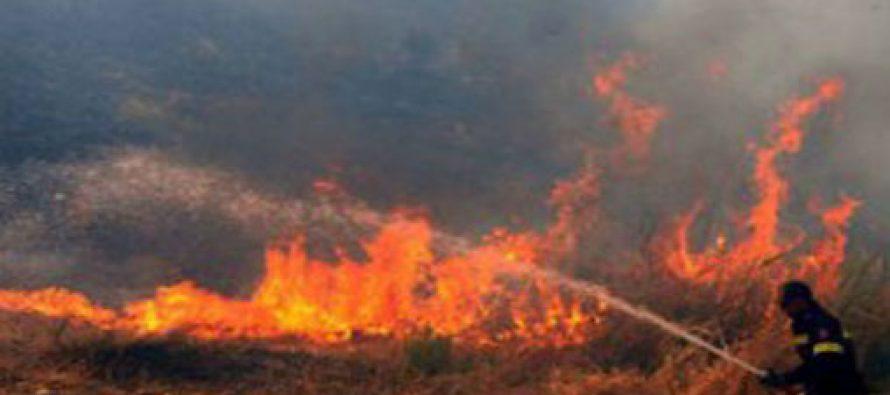ხანძარი ლოტკინზე ლოკალიზებულია – ცეცხლი ხევში გადაყრილ საბურავებს ეკიდა