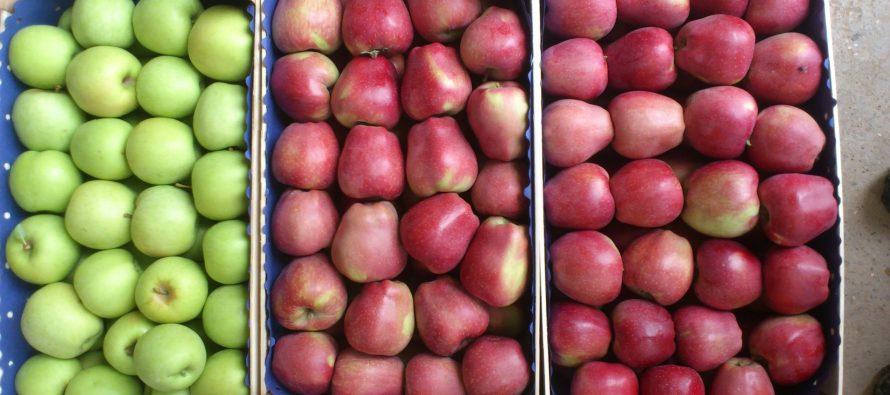 სერბეთი შესაძლებელია პოლონური ვაშლის რეექსპორტს ანხორციელებდეს რუსეთში