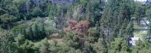 """""""წალენჯიხის მუნიციპალიტეტის ქალაქ ჯვარში ამორტიზებულ ხეებთან ერთად მიმდინარეობს წიწვოვანი ჯიშის ხეების ჭრა, სავარაუდოდ ეს ხდება უკანონოდ, ნებართვის გარეშე""""–განუცხადეს """"თაიმერს""""ადგილობრივებმა. მათივე განცხადები ეჭვს აძლიერებს ისიც, რომ აღნიშნული წიწვოვანი ხეების ფიცრებად დამუშავება ხდება ქ. ჯვარში გამგებლის წარმომადგენლის სტავრო ჭანტურიას საკუთრებაში მყოფ სახერხში.  აღნიშნულ საკითხთან დაკავშირებით ჩვენ დაუკავშირდით ქ.ჯვარის მკვიდრს, ჟურნალისტის და გარემოს დამცველს ბონდო მანიას. """"არამარტო ჯვარში, მუნიციპალიტეტის მასშტაბით მიმდინარეობს ხეების ჭრა. ვინაა გამკითხავი, არავის ადარდებს ბუნება, ფეხებზე კიდიათ. მივსწერე სამგრელო–ზემო სვანეთის გუბერნატორს ლევან შონიას,მაგრამ ნული მიმატებული ნულზე და გამრავლებული ნულზე ნულია! ფეხებზე კიდიათ!"""