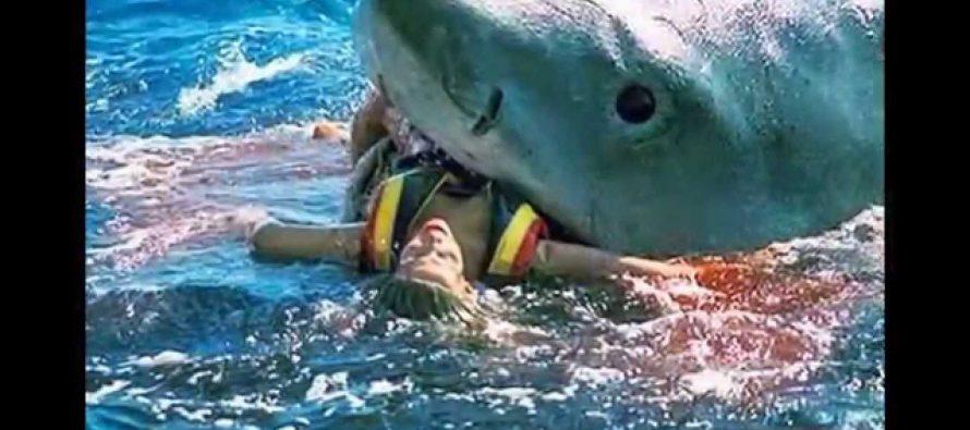 ეგვიპტეში ზვიგენმა გერმანელი ტურისტი იმსხვერპლა