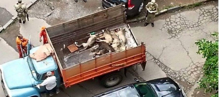 ბავშვთა ინფექციურ საავადმყოფოსთან 6 მგელი მოკლეს