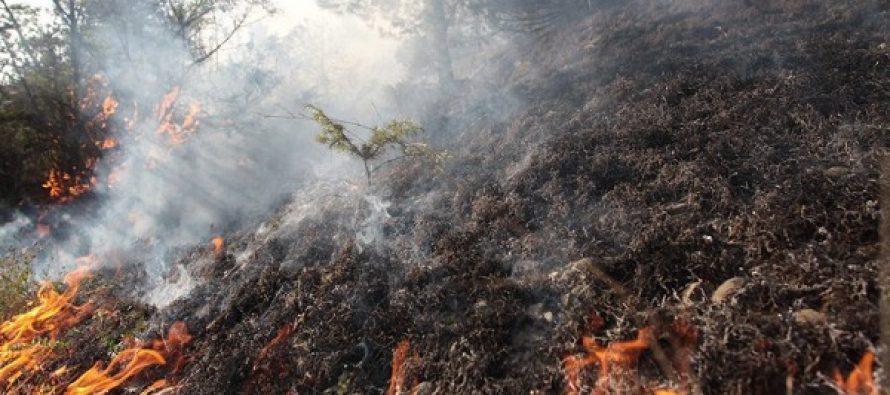 ცეცხლი ტყის მასივის  3 ჰექტარ ფართობზეა მოდებული