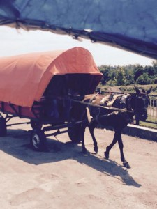 ქართველებისა და აფხაზების ერთობლივი ბიზნესი - ცხენების მაფია რუხის ხიდზე