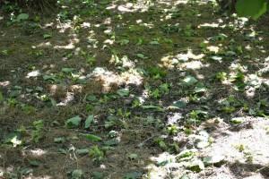 სამეგრელოს რეგიონში სტიქიით მიყენებული თხილის ზარალის ანაზღაურება