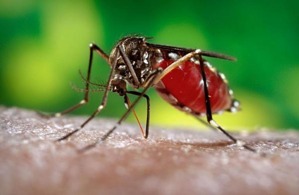 კოლუმბია: ზიკას ვირუსით ნახევარი მილიონი დაავადდება
