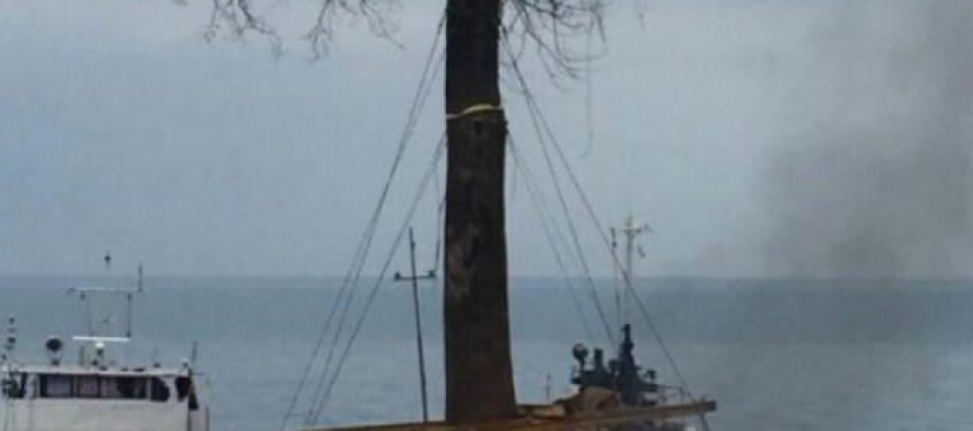 ივანიშვილს ციხისძირიდან ხეები ვერ გადააქვს – გემი ქვიშაში ჩაეფლო