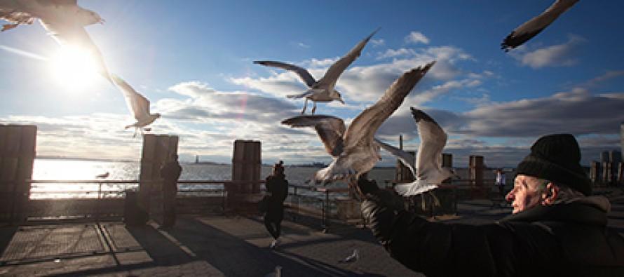 ჩიტების სკინტლმა ამერიკული ატომური რეაქტორი გააჩერა