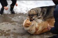 (VIDEO) ძაღლების ჩხუბთან დაკავშირებით, რომლის ვიდეოც სოციალურ ქსელში გავრცელდა, გამოძიება დაიწყო