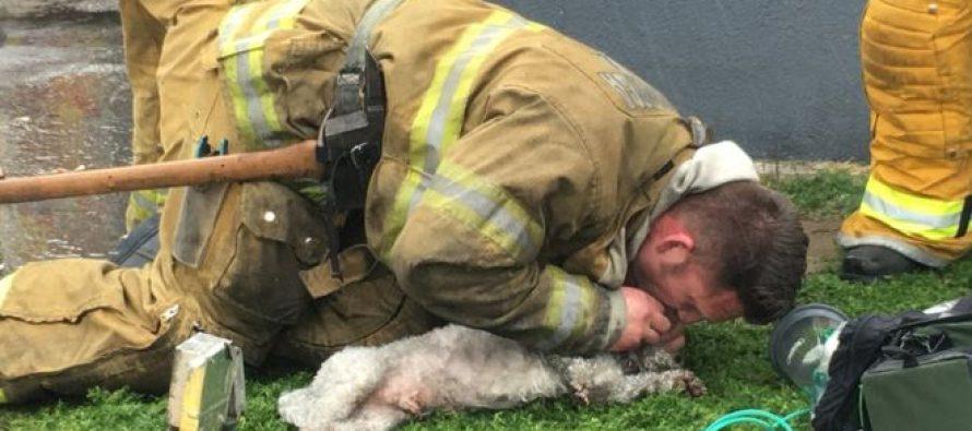 ამერიკელმა მეხანძრემ ძაღლი ხელოვნური სუნთქვით გადაარჩინა
