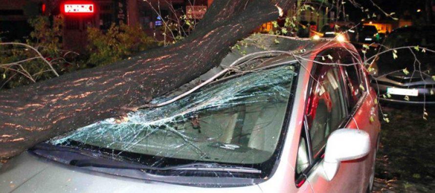 კოტე აფხაზის ქუჩაზე ხის მოტეხვამ რამდენიმე ავტომობილი დააზიანა