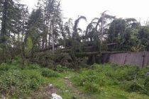 ძლიერმა ქარმა პრობლემები შექმნა ზუგდიდის მუნიციპალიტეტის რამდენიმე სოფელში