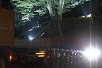 ჩაჭრილი ელექტროსადენები და რკინიგზის ხაზები და დაზიანებული წყლის მილი – ივანიშვილის მორიგი ხე
