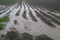 ახალციხის მუნიციპალიტეტში წვიმამ და სეტყვამ ნათესები დატბორა