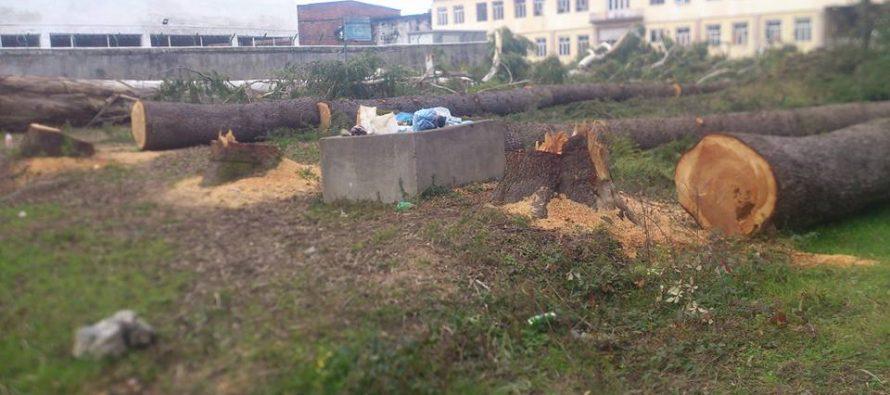 ზუგდიდში აღმაშენებლის ქუჩაზე, ყოფილი იუსტიციის სახლის წინ ხეების მასიური გაჩეხვა დაიწყეს