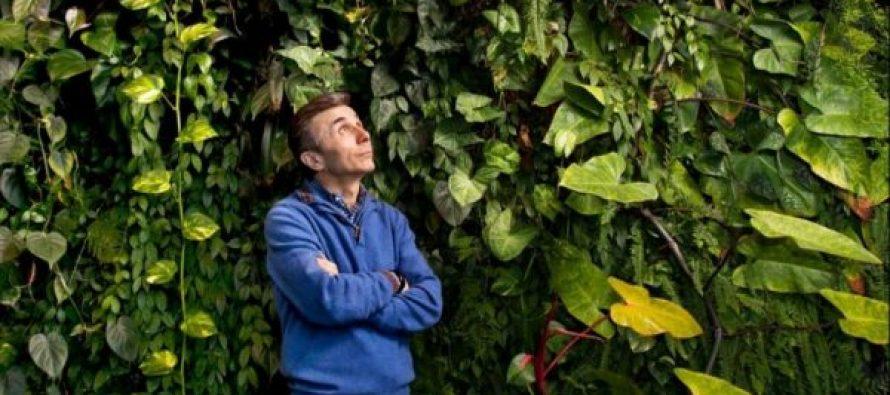 """კახა მიქაია: """"ოცნება"""" ჭაობში – გადარგული ხის მისტერია"""