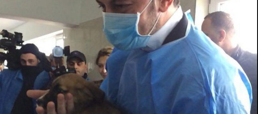 კახა კალაძემ ცხოველთა მონიტორინგის სააგენტოდან ერთი ძაღლი მერიაში წაიყვანა