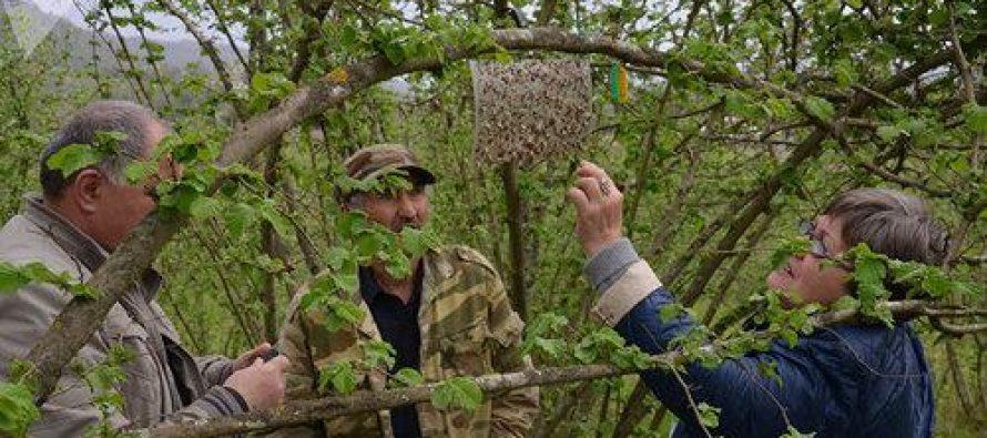რუსეთმა აფხაზეთიდან მცენარეული წარმოშობის ყველა საქონლის იმპორტი აკრძალა