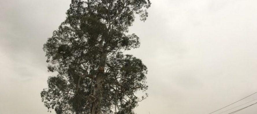 ზუგდიდიდან ივანიშილისთვის ხის გადატანამ ელექტროგადამცემი ბოძები და საგზაო ნიშნები დააზიანა