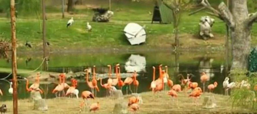 როგორ გამოიყურება დენდროლოგიური პარკი – (VIDEO)