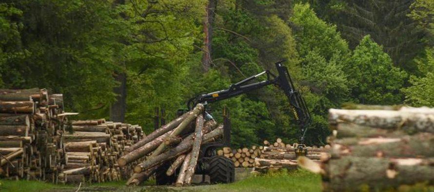 პოლონეთს ტყის მასივის გაჩეხვის გამო დღეში 100 ათასი ევროს ჯარიმის გადახდა მოუწევს