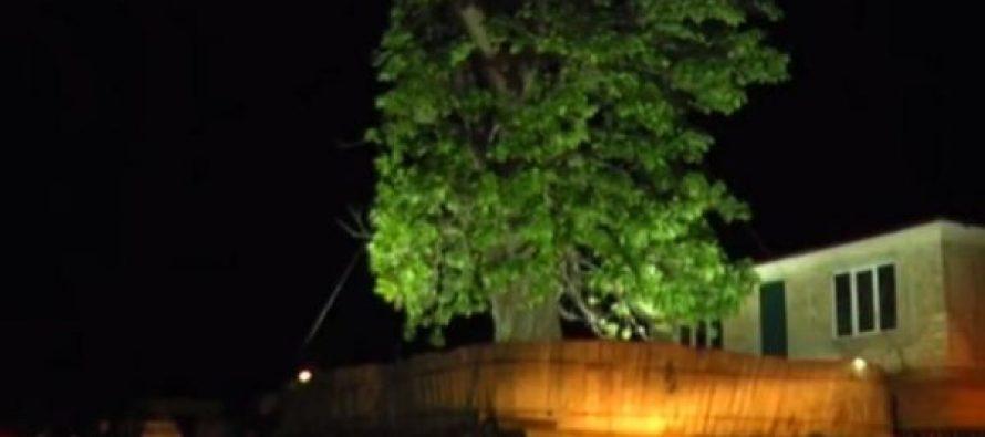 პარალიზებული მოძრაობა და უშუქოდ დარჩენილი 11 სოფელი – სამეგრელოდან ივანიშვილის ეზოში გადასარგავად ხე მიაქვთ