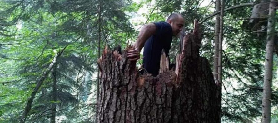 მეხის ჩამოვარდნამ გლოლის ტყეში ხანძარი გამოიწვია