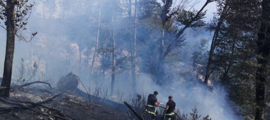 საგანგებო სიტუაციების სამსახურის ინფორმაციით, ხაშურში ტყის ხანძარი ლოკალიზებულია