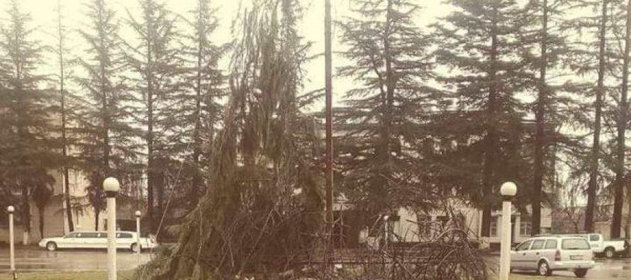 ხონის მუნიციპალიტეტში მთავარი ნაძვის ხე დაიწვა
