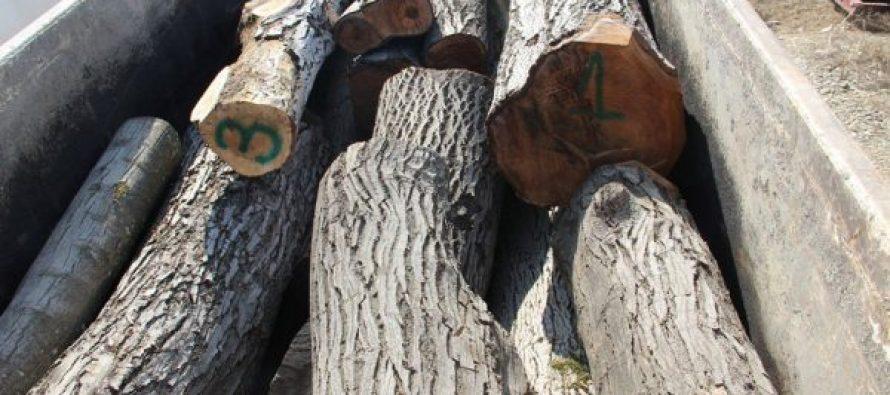 გარდაბანში ხე-ტყის უკანონო ტრანსპორტირების ფაქტი გამოვლინდა
