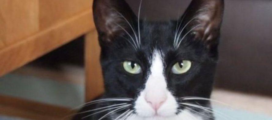 ბრიტანელმა კატამ მერძევეს ფული მოპარა და სახლში მოიტანა