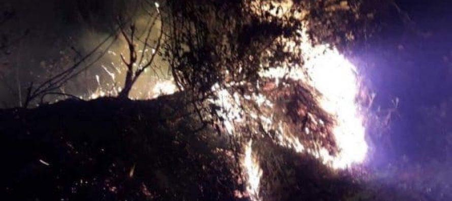 ოზურგეთში, სოფელ შემოქმედთან ტყეში ხანძარი ლიკვიდირებულია