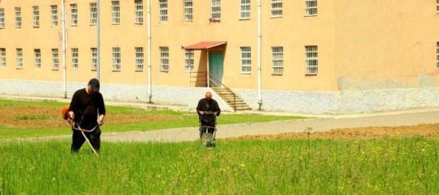 გლდანის საპატიმროს მსჯავრდებულები დაწესებულების ტერიტორიაზე სოფლის მეურნეობის სფეროში დასაქმდებიან