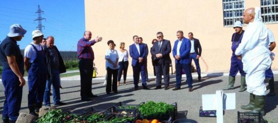 იუსტიციის მინისტრი გლდანის პენიტენციურ დაწესებულებაში პატიმრების მიერ მოყვანილი მოსავლის აღებას დაესწრო