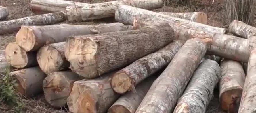 მარტვილში ხე-ტყის უკანონო მოპოვების ფაქტი გამოავლინეს