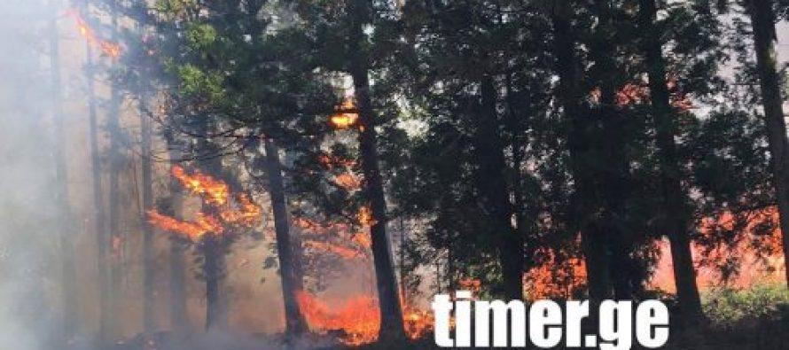 სოფელ ზედა ეწერის ტერიტორია ცეცხლი წიწვოვან ხეებს უკიდია