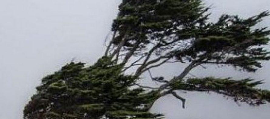 კოჯორში, ახალდაბასა და ბეთანიაში ძლიერი ქარის შედეგად რამდენიმე ხე წაიქცა, დაზიანებულია ერთი მანქანა