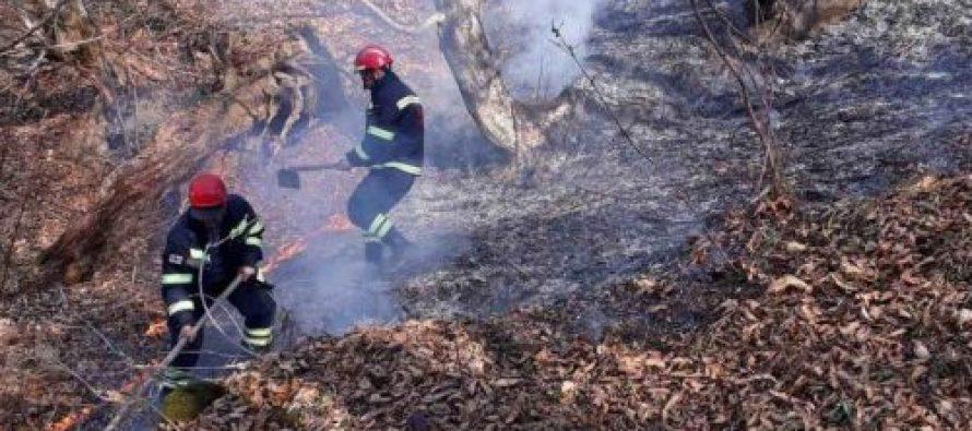 500 მეხანძრე-მაშველი შვიდ ლოკაციაზე განაგრძობს ცეცხლის ქრობის სამუშაოებს